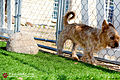 Pawliday Inn Pet Resort 17.JPG