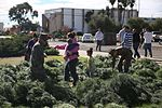 Peltzer Pines Tree Farm donates 150 trees to service members and their families 131216-M-EG514-003.jpg