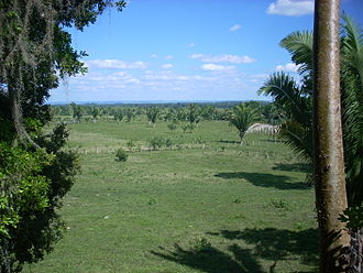 Peten savannah Peten savannah 1.jpg