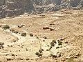 Petra - panoramio (4).jpg