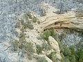 Photos of cliff dwelling ruins in the aftermath of the Long Mesa Fire, Mesa Verde National Park (aaefbea6-ccb1-4e60-ba83-e9b6e96daabd).jpg
