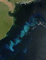 Phytoplankton bloom in the South Atlantic (February 15, 2006) seen from space