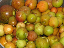 Picked mangaba fruit.png