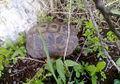 PikiWiki Israel 28850 Turtle.jpg