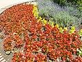 Piros virágok, Szent Borbála tér, 2018 Oroszlány.jpg