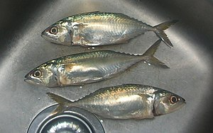 Short mackerel - Image: Pla thu 831