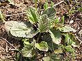 Plants in Donetsk 52.JPG