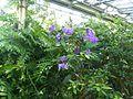 Plants in the University of Copenhagen Botanical Garden 02.jpg