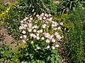Poltava Botanical garden (117).jpg
