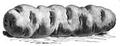 Pomme de terre vitelotte Vilmorin-Andrieux 1883.png