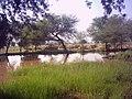 Pond - panoramio (18).jpg