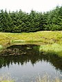 Pond Reflections, Glenshimmeroch Forest. - geograph.org.uk - 528317.jpg