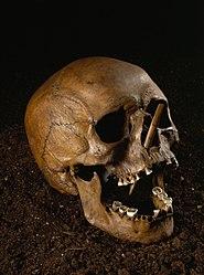 Skull from Porsmose
