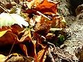 Praha, Liboc, obora Hvězda, podzimní listí III.jpg