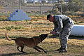 Processing four-legged deployers 140123-F-ML420-022.jpg