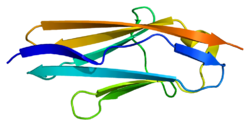 Protein SPEG PDB 1u2h.png