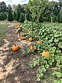 Pumpkin Patch in Little Rock 12 59 59 888000.jpeg