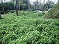 Putrajaya's Botanical Garden 33.jpg