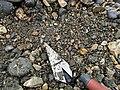 Pyrite Ammonite found below Black Ven (1).jpg