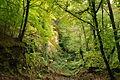 Quarry in Plymbridge Woods (5952).jpg