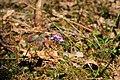 Růždí, dřípatky 02.jpg
