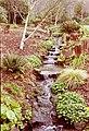 RHS Garden Rosemoor - geograph.org.uk - 108418.jpg