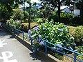 Rail trail (Ichinotsubo shortcut) - panoramio - Kaz Ish (3).jpg