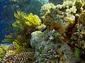 Reef2177 - Flickr - NOAA Photo Library.jpg