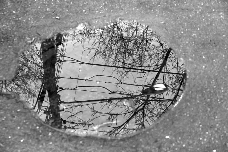 File:Refection in rain puddle.png