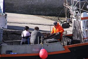 Retour de la pêche à la seiche du fileyeur Jason IV (19).JPG