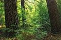 Reynolds Spring Natural Area (2) (29483405405).jpg