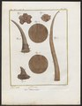 Rhinoceros unicornis - hoorn - 1700-1880 - Print - Iconographia Zoologica - Special Collections University of Amsterdam - UBA01 IZ22000235.tif