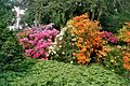 Rhododendron Strauch.jpg