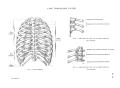 Richer - Anatomie artistique, 2 p. 17.png