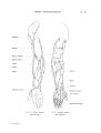 Richer - Anatomie artistique, 2 p. 79.png