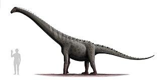 <i>Rinconsaurus</i>