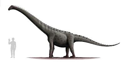 Rinconsaurus test 2.jpg