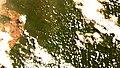 River Guariba, Amazonas.jpg