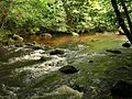 River Teign by Dogmarsh Wood - geograph.org.uk - 915685.jpg