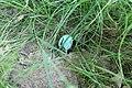 Robin's Egg in the Grass.jpg