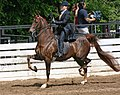 Rock Creek Spring Horse Show 2008 (2674578002).jpg
