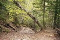 Romania - forest trail.jpg