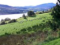 Rough grazing, Loch Tummel - geograph.org.uk - 1533887.jpg