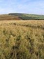 Rough grazing on Commonside Moor - geograph.org.uk - 577201.jpg