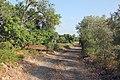 Rural road in Algarve (37028254895).jpg