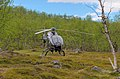 SE-JJF Airbus EC 120B Colibri helicopter operated by Fiskflyg in Sarek National Park (DSCF1087).jpg