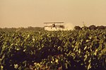 SULFUR-DUSTING OF GRAPE VINES, 05-1972 - NARA - 542503.jpg