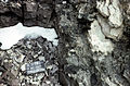 S of Mt Jackson rhyolitic fragment in complex breccia.jpg