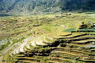 Mountain Province - Image: Sagada rice terraces
