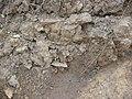 Saldaña Yacimiento Valfrío 08.JPG